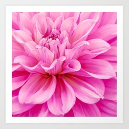 Floral Art Pink Dahlia Close Up 1 Art Print