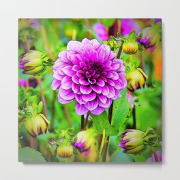 LILAC PURPLE DAHLIA FLOWERS & BUDS Metal Print