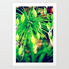 PurpleFlowers Art Print