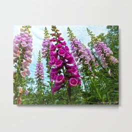 FOXGLOVES!!!! Metal Print
