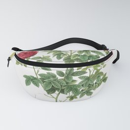 Pompon Rose (1817-1824) by Pierre-Joseph Redoute and Henry Joseph Redoute Fanny Pack