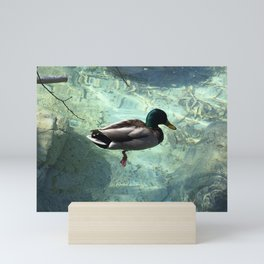 Mallard Duck Mini Art Print