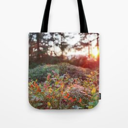 Evening glow in the forest Tote Bag
