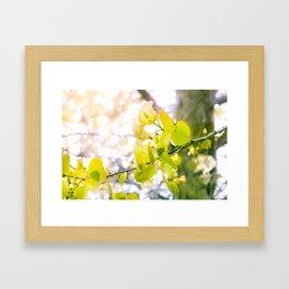 Summer Birch Framed Art Print