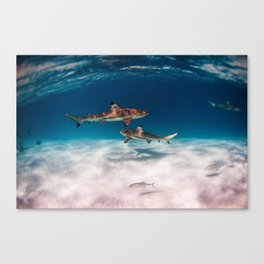 Hello, Sharks! Canvas Print