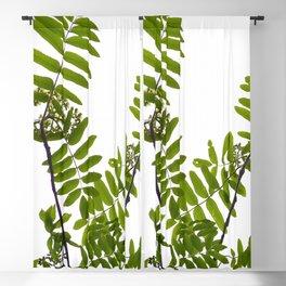 Green Rowan Leaves White Background #decor #society6 #buyart Blackout Curtain