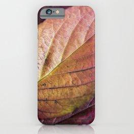 Autumn Colours II iPhone Case