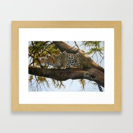 A Leopard ready to Pounce Framed Art Print