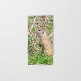 Souslik (Spermophilus citellus) European ground squirrel in the natural environment Hand & Bath Towel
