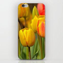 colourful tulips III iPhone Skin