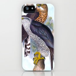 Goshawk, Hawk, Astur palumbarius, Birds of Europe Antique Bird Print by Elizabeth Gould iPhone Case