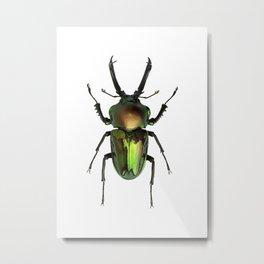 Rainbow Stag Beetle Metal Print