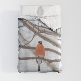 Bullfinch on the birch tree branch at winter  Comforters