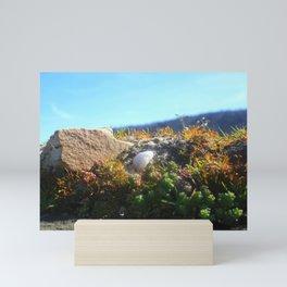 White Stone In The Sun Mini Art Print