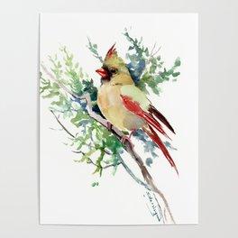 Cardinal Bird Artwork, female cardinal bird Poster