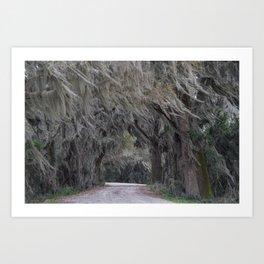 Mossy Trail Art Print