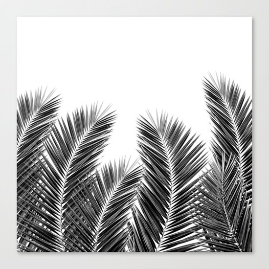 White Palm Skies Canvas Print