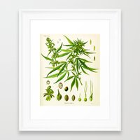 cannabis Framed Art Prints featuring Cannabis Sativa by Patrick Farnsworth