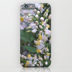 Around Our Dreams Slim Case iPhone 6s