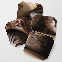 Cat Meme Coasters For Any Decor Style Society6