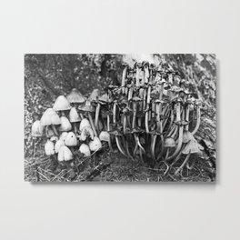 Shaggy Ink Cap Mushrooms 7 Metal Print