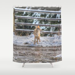 Coyote in Spring Snow Shower Curtain
