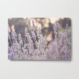 Smells like lavender Metal Print