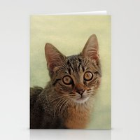kitten Stationery Cards featuring kitten by lucyliu
