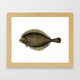 European Flounder Framed Art Print