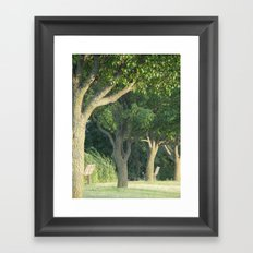 Beyond The Trees Is New Life  Framed Art Print