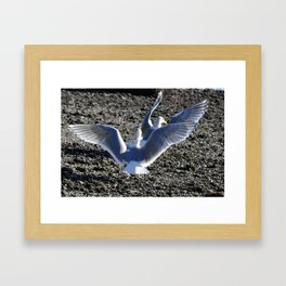 A competition arises Framed Art Print