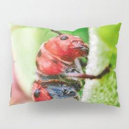 Red Milkweed Beetle Climbing. Macro Photography Pillow Sham