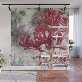 Red Kangaroo Paw Wall Mural