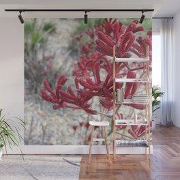 Red Kangaroo Paw Wall Mural