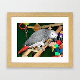Doobie the parrot Framed Art Print