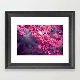 Autumn foliage in backlight Framed Art Print