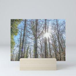Sunrays on the forest Mini Art Print