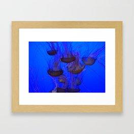 Jelly School Framed Art Print