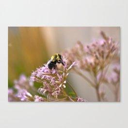 Bee Pollen II Canvas Print