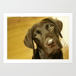 Labrador Pup with a Moth on his Nose Art Print