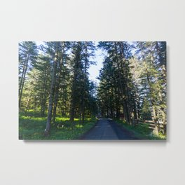 Alaskan Nature Walk Metal Print