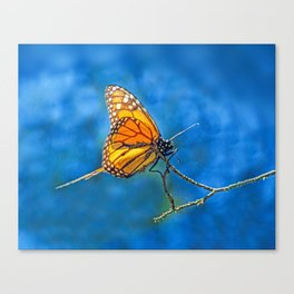 BUTTERFLY LIGHT Canvas Print