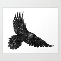 Raven in flight Art Print
