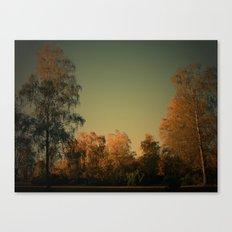 Lichtstimmung auf der Heide Canvas Print