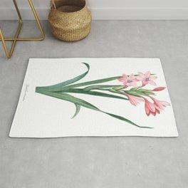 HIGHEST QUALITY botanical poster of Gladiolus Rug