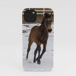 Brown Foal In The Snow   Animal Photography iPhone Case