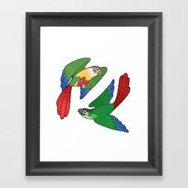 Green Cheek Conures Framed Art Print