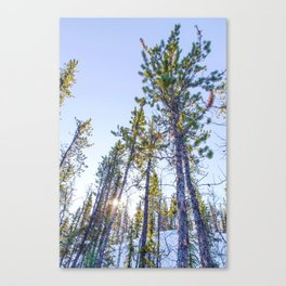 Sunset in the forest Canvas Print