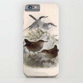 White lored Gnatcatcher Nightingale Wren microcerculus luscinia4 iPhone Case