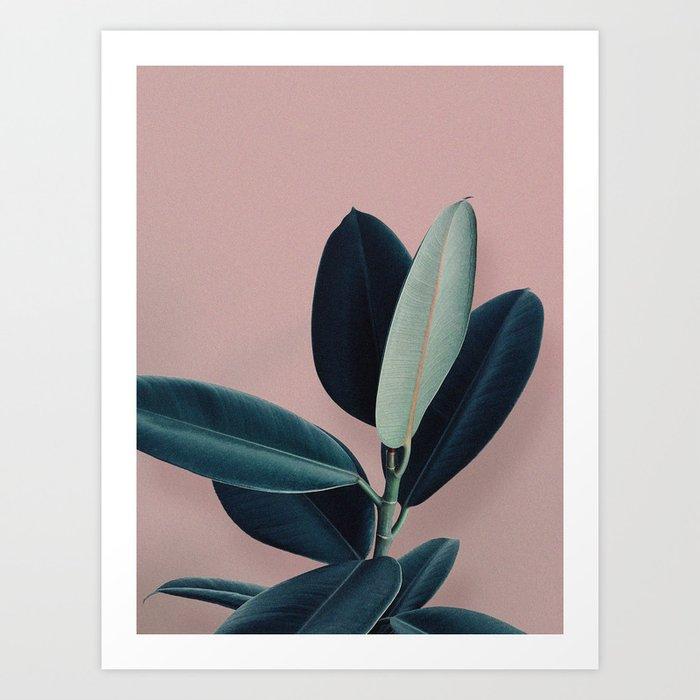 Ficus elastica - berry Art Print
